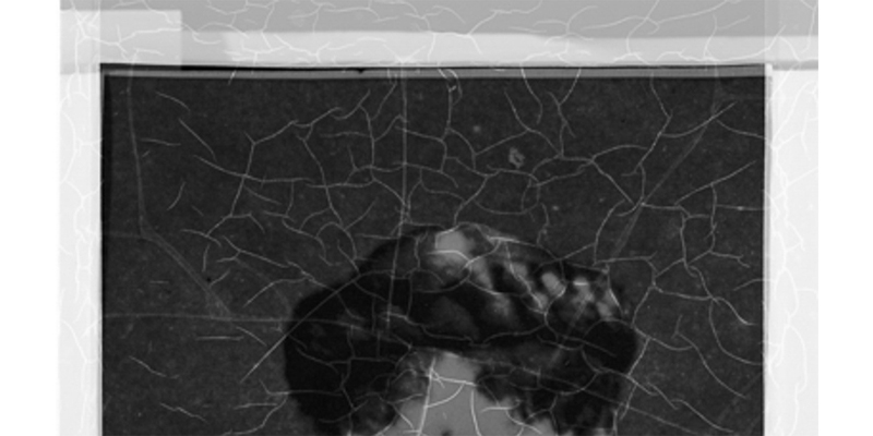 Close up of a large format negative affected with vinegar syndrome